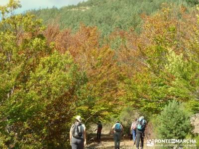 Parque Natural de Tejera Negra - Cantalojas - Guadalajara - Sierra de Ayllón;calidad de viajes